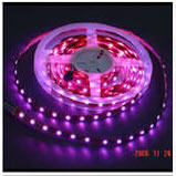 Flexible Ribbon RGB LED Strip Showing Purple
